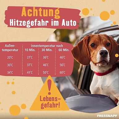 Hitzegefahr-Hund.png