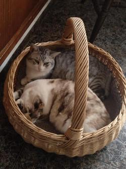 Minka und Graubla