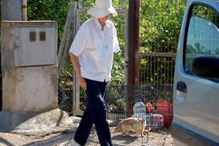 Katzen im Campo, 29.06.2020
