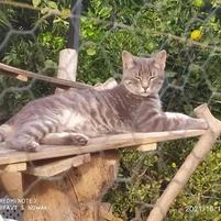 Katzengehege26.jpg