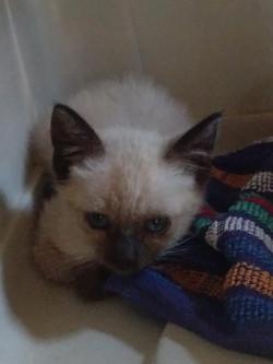 Kätzchen, ca. 6 Wochen alt (24.06.)