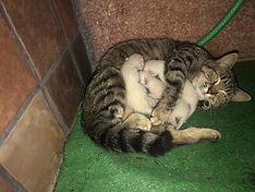 Katzenbabies1.jpg