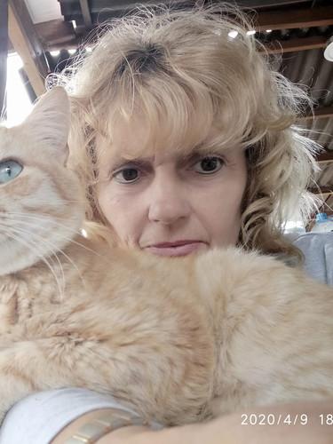 Katzenwohnwagen