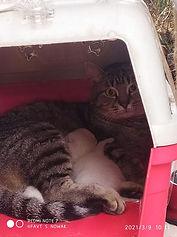 Katzenbabies2.jpg