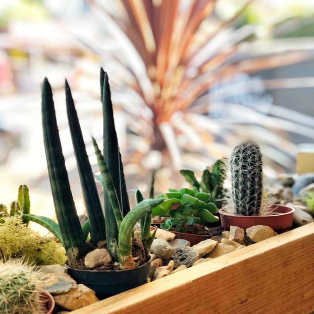 Plants Front Window.jpg
