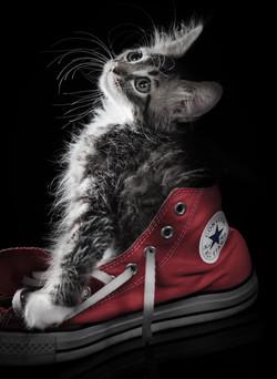lemmikkikuvaus, kissakuva