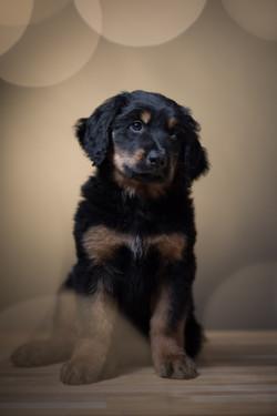 koirakuvaus, lemmikkikuvaus, valo