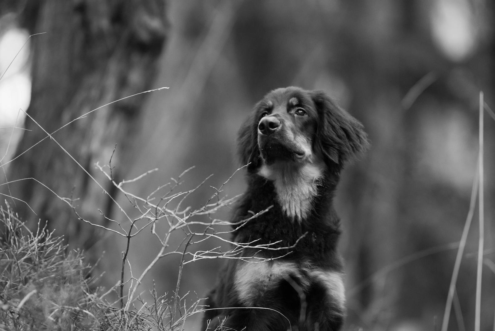 koirakuvaus, valokuva, lemmikkikuva