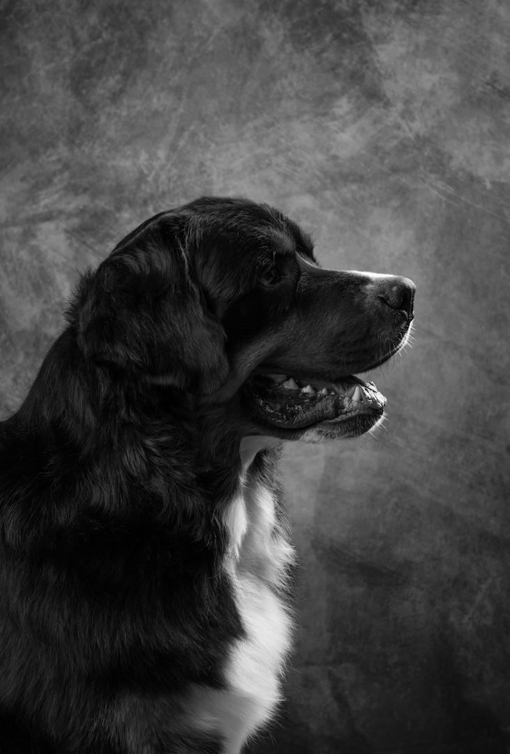 koirakuvaus, lemmikkikuvaus