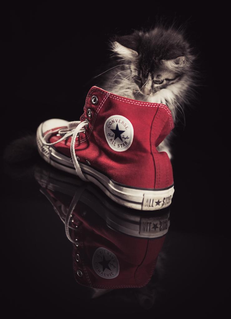 Kissavalokuvaus