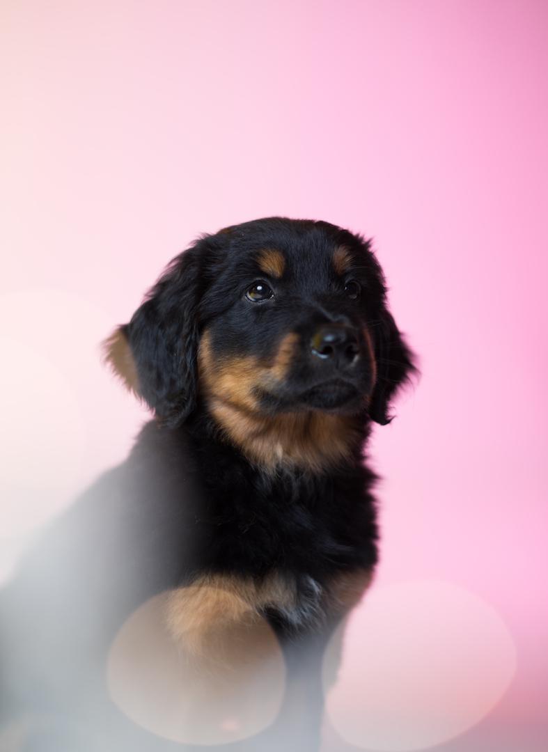 koirakuvaus, valokuvaus