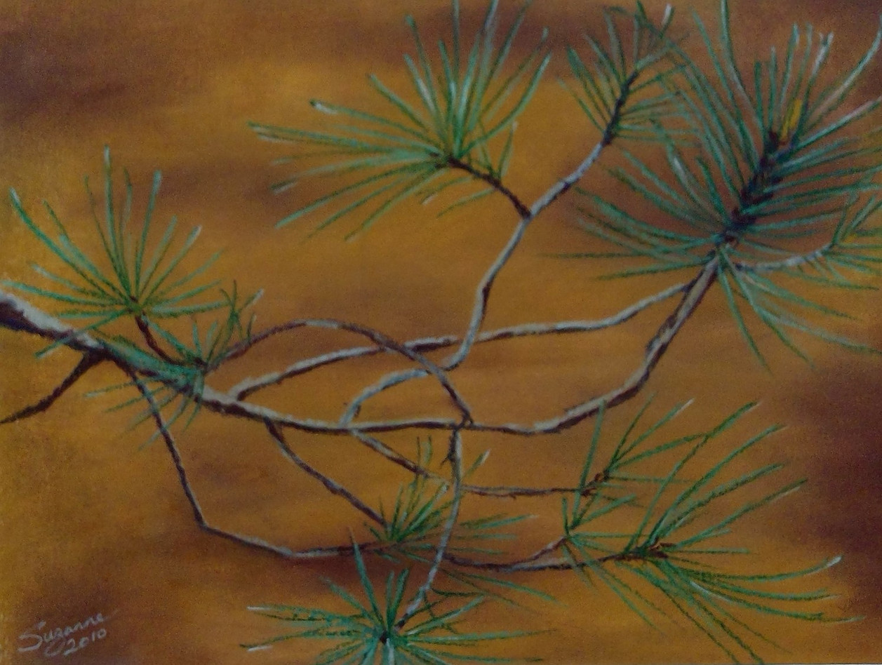 Pine branch up close.jpg