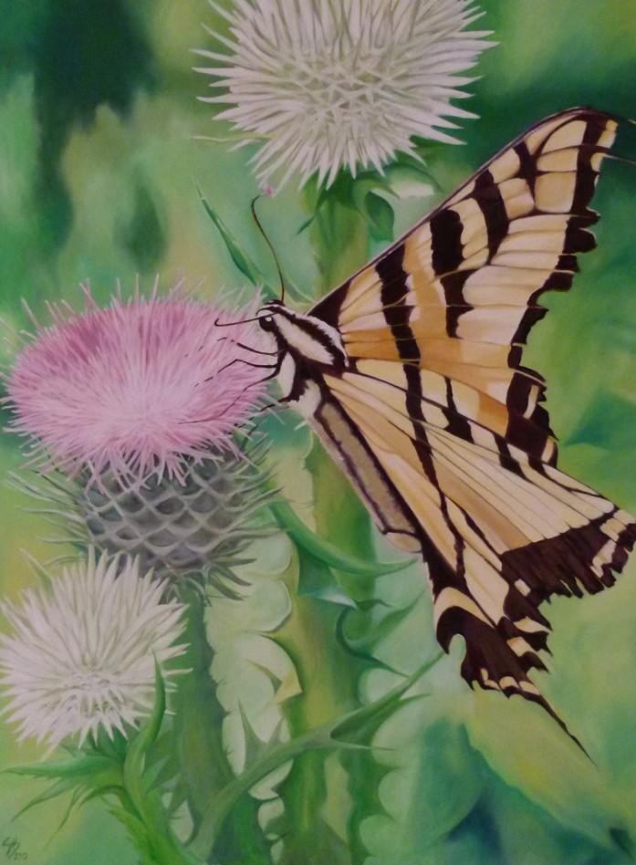 Tiger Swallowail Butterfly.JPG
