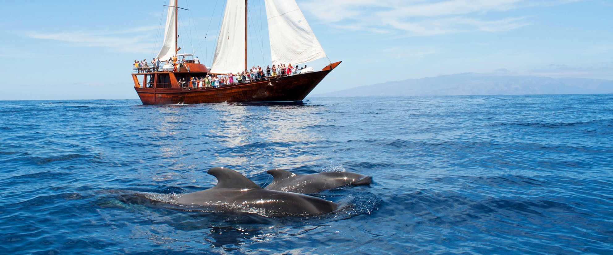 Whale & Dolphin Excursions
