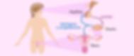 control-hormonal-ciclos-menstrual.png