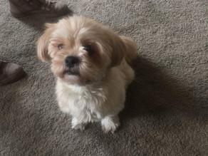 Satori Crown: Puppy Appreciation