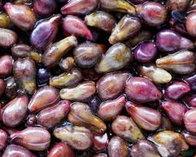 純葡萄籽油
