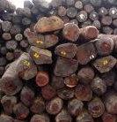 花梨木精油Rosewood 10ml