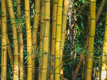 Just Because It's Bamboo Doesn't Mean It's Natural!