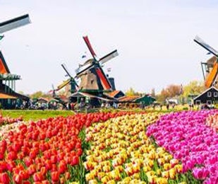 Crystal River - Holland Tulips and Windm