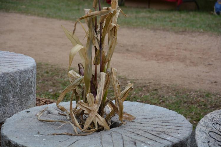 Corn in a mill stone