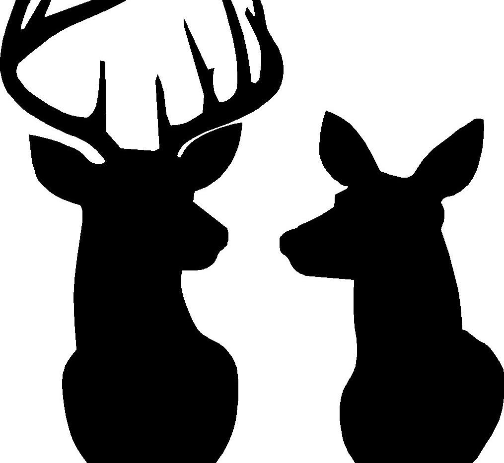 deer doe.jpg