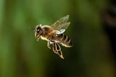 Bee Green Background.jpeg
