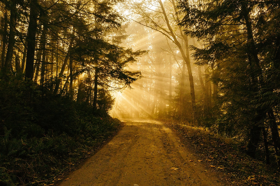 CPC Forest trail with light.jpg