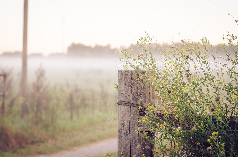 courageous-path-background-fence-flipped