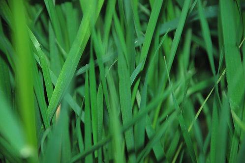 LEMON GRASS SCENT