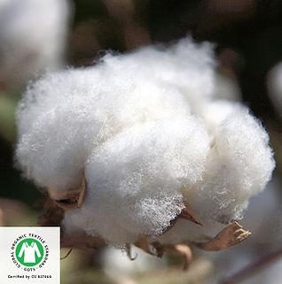 Organic-Cotton.jpg