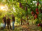 181116 Website Farm Photo.jpg