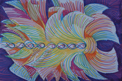 Energy Series 3 /Chakra