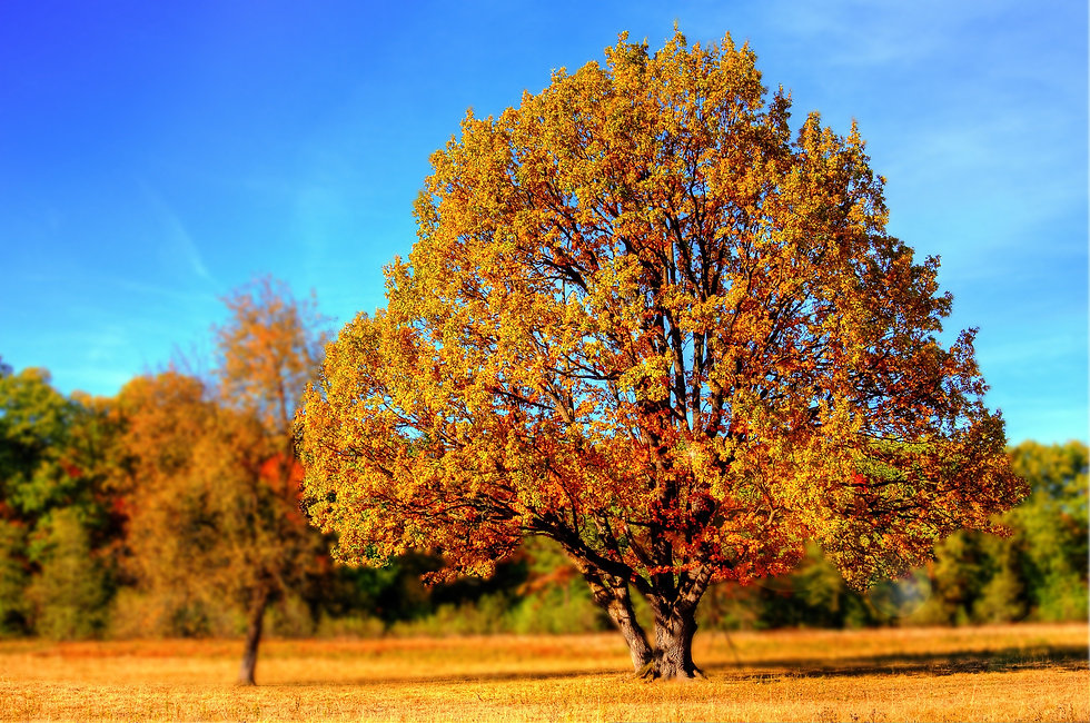 tree-99852.jpg