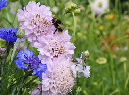 Beneficial blooms in your garden