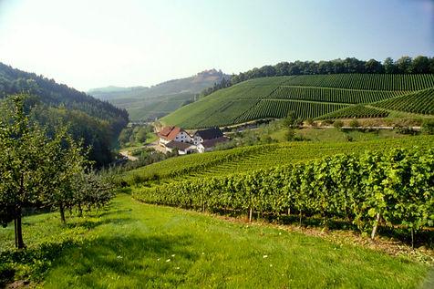 Weinlandschaft bei Durbach in der badischen Ortenau