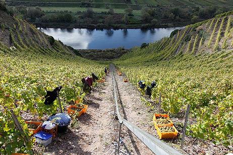 Bremmer Calmont, der steilste Weinberg Europas,Weingut Franzen, Bremm an der Mosel