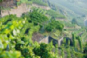 Weinbauregion AHR, Steillagen Rotwein Spätburgunder