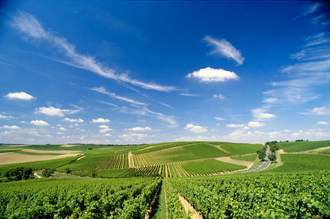 Weinlandschaft bei Büdesheim, Rheinhessen