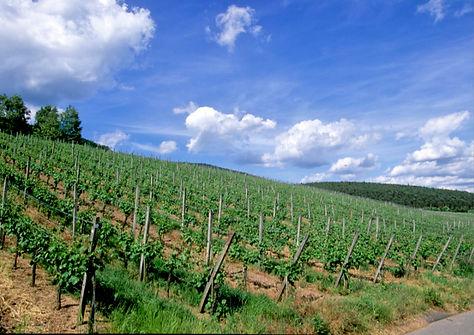 Fränkische Weinlandschaft bei Bürgstadt