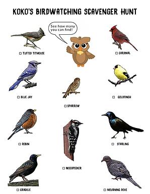 birding+scavenger.png