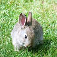 baby bunny (2018_08_29 11_18_46 UTC).JPG