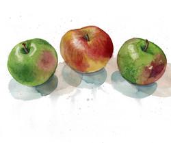 11 apples.jpg