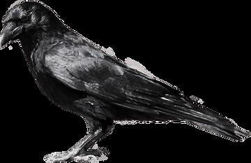 cuervo 3.png