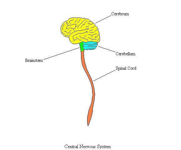 CentralNervousSystemComplete