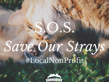 #LocalNonProfit: S.O.S- Save Our Strays
