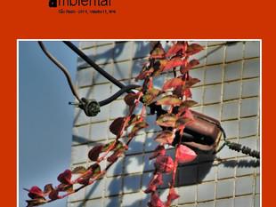 Rede Brasileira de Educação Ambiental disponibiliza nova edição da RevBEA