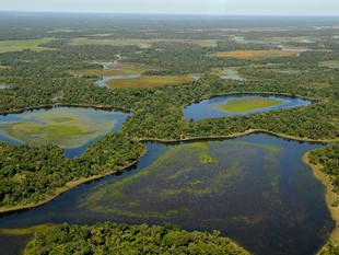 WWF-Brasil reivindica aprovação da Lei do Pantanal