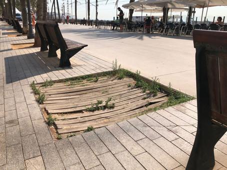 David Torrents reclama que es reposin tots els arbres caiguts, talats o morts de la ciutat