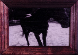 黑馬Devil/洛杉磯